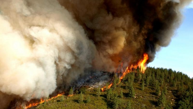 Three Ways to Prepare for a Wildfire